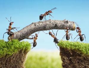 teamwork, team of ants costructing bridge